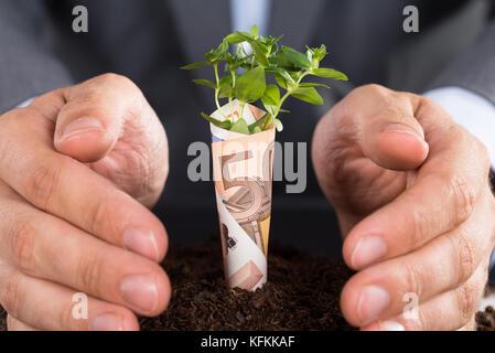 Empresario proteger arbolito pequeño creciendo desde el suelo