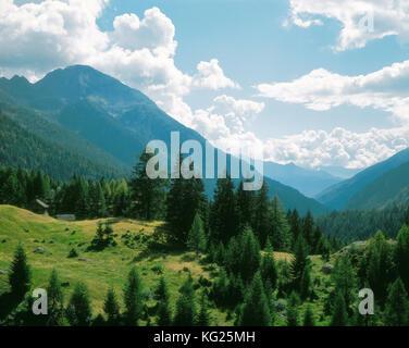 Val Lavizzara, Schweiz, Suiza *** título Local *** ,Montaña,Bosque,fir,árbol,Alpes,Tessin