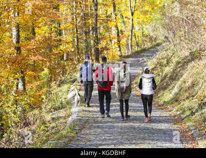 Dos parejas jóvenes con un perro, caminar en un parque en otoño bosque Foto de stock