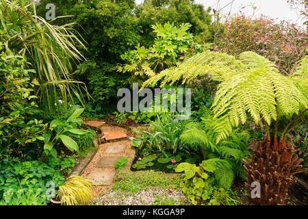 Pequeño estanque de jardín en un jardín exótico en Plymouth, Reino Unido, rodeado por grandes hojas de plantas de follaje