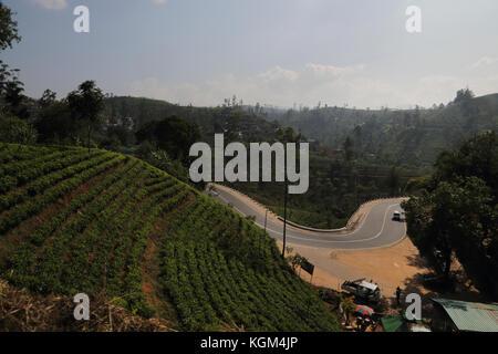 Hill Country de la provincia central de las plantaciones de té de Sri Lanka cerca de Hatton Foto de stock