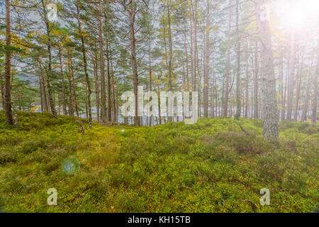 Impresiones de la rothiemurchus forrest en el parque nacional de cairngorms