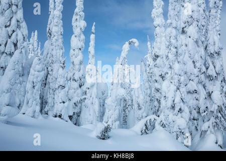 Coníferas cubiertas de nieve en la montaña Silver Star, British Columbia, Canadá Foto de stock