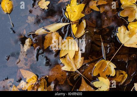 Hojas de otoño en el charco de agua