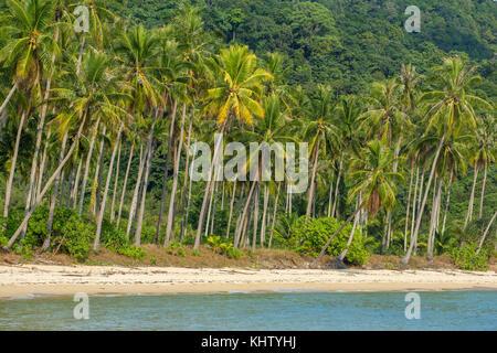 Palmeras en la hermosa playa tropical en la isla de Koh Kood, en Tailandia