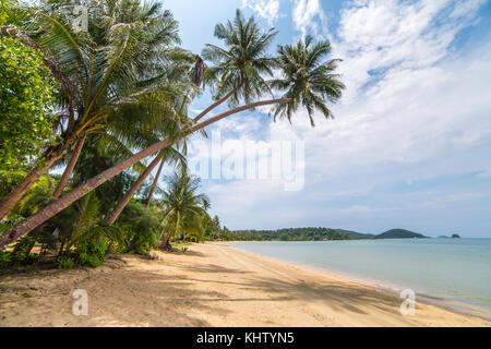 Palmeras en la hermosa playa tropical de la isla de Koh Chang en Tailandia