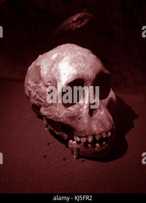 Cráneo de un homo sapiens tempranos encontrados en Europa oriental.