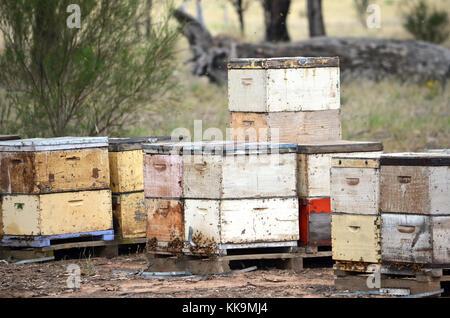 Cajas de abejas Foto Imagen De Stock 164834011 Alamy