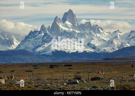 Monte Fitz Roy, Parque Nacional los Glaciares (Patrimonio de la Humanidad), y guanacos salto cerca, Patagonia, Argentina, Sudamérica