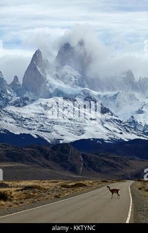 Monte Fitz Roy, Parque Nacional los Glaciares (Patrimonio de la Humanidad), y carretera de cruce guanaco cerca de el Chalten, Patagonia, Argentina, Sudamérica Foto de stock