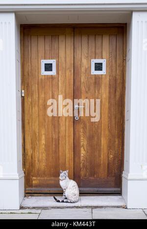 Gato de Bengala gato blanco luciendo el collar de Bell, sentado frente a una puerta de madera