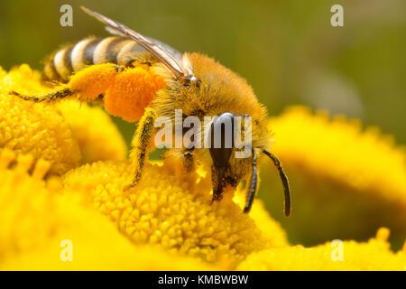 En el flowr abeja amarilla