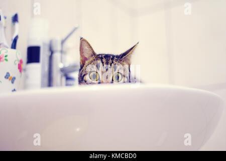 Gato atigrado en el fregadero.