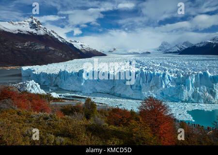 Glaciar Perito Moreno, bosque de lengas en otoño, y los turistas de paseo, parque nacional Los Glaciares (Zona patrimonio de la humanidad), Patagonia, Argentina, sout Foto de stock