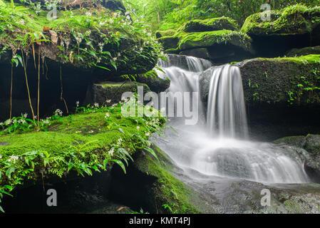 Paisaje de cascada en la profunda selva de Bolaven Plateau, con verdes Champasak mos y pequeñas flores blancas.