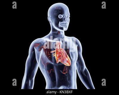 Procesamiento digital 3D de un corazón humano aislado sobre fondo ...