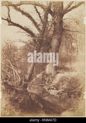 [Los Árboles]. Artista: Thomas Keith (British, Kincardine, aberdeenshire, Escocia Londres 1827-1895); Fecha: 1854-57; Media: la impresión del papel papel salado