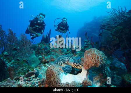 Los buceadores ver la interacción de diferentes especies de vida marina, tienen acceso a la misma fuente de alimentos.