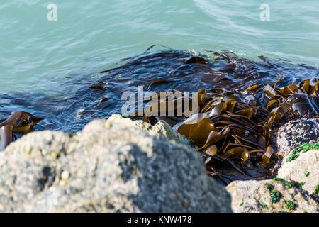 Algas Cerrar textura Shot rocas orilla Playa