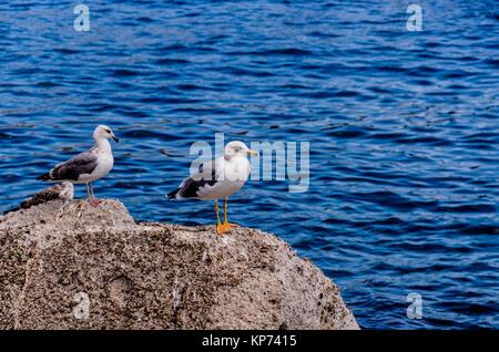 Dos gaviotas sobre una roca en frente del puerto de la isla de Stromboli
