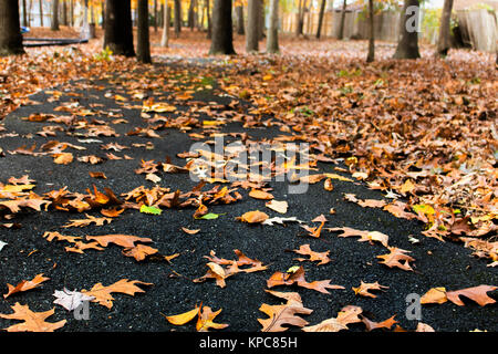 Un paseo en las hojas de otoño