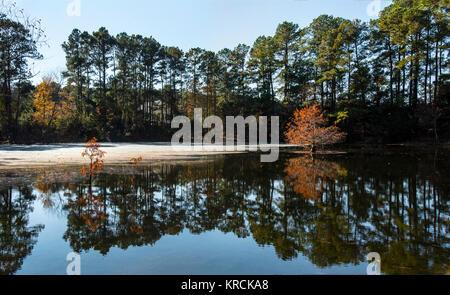 Reflejos en el estanque