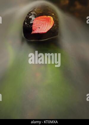 Hoja roja de la frambuesa. Broken rojo naranja hoja atrapados en la piedra negra en los flujos rápidos. Líneas de plata de burbujas en el agua fría se crea por largos exposu