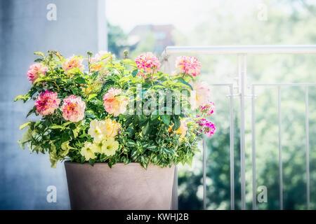 Sembradora De Flores En El Balcón O Terraza En La Luz Del