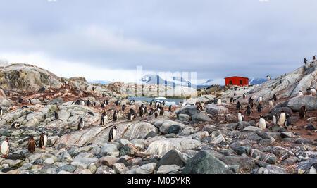 Costa rocosa atestados con la bandada de pingüinos gentoo y fjord con polar choza en el fondo, la isla Peterman, Península Antártica. Foto de stock