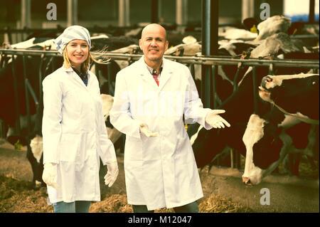Veterinarios profesionales trabajando con vacas en cowhouse afuera