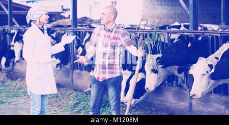 Par de profesionales veterinarios que trabajan con vacas en cowhouse lechoso al aire libre