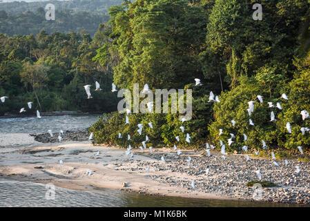 Selva Amazónica. Río Misahuallí. La provincia de Napo, Ecuador