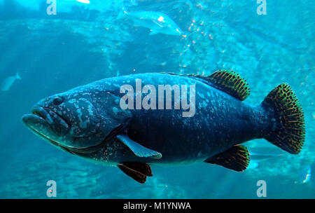 Oferta subacuática de peces en Cape Town, Sudáfrica
