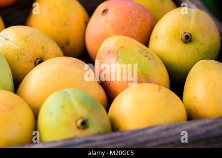 La fruta del mango fresco en una caja de madera, full frame, closeup. Mango amarillo, rojo, verde color, mostrar al mercado local puesto en Sydney, Australia.