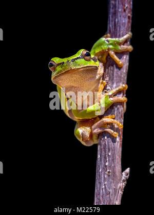 Cute Rana con trazado de recorte Foto & Imagen De Stock: 39140604 ...
