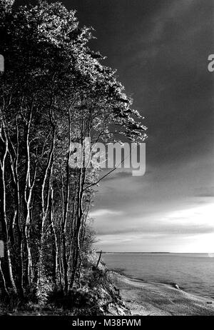 Loess boscosas acantilado en la costa del Mar Báltico a lo largo de la línea de playa en Rowy, Pomerania, Polonia