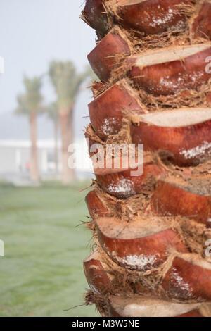 Palmera tallo fuerte color marrón / Trunk Cerrar toma durante el día. Otros árboles pueden ser vistos en la distancia.
