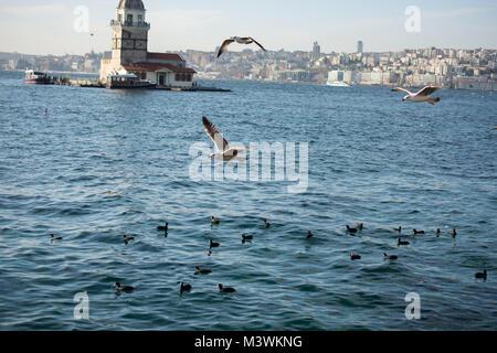 Seagull único se encuentra en la orilla del mar