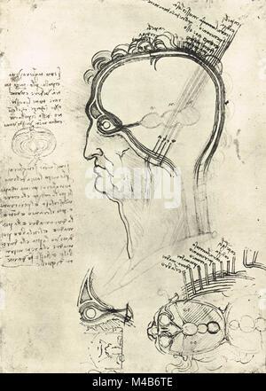 Secciones de la cabeza de un hombre que muestra la Anatomía del ojo ...