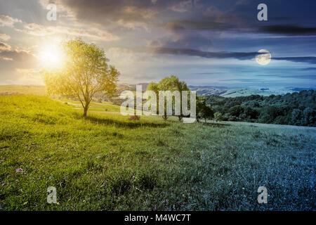 El concepto de cambio de hora. La fila de árboles en la ladera de hierba hermosa campiña en verano. Foto de stock