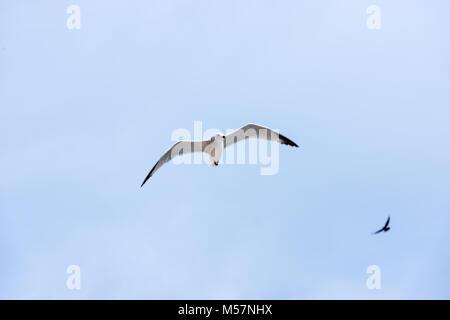 Las gaviotas vuelan sobre el Mediterráneo en Cala Pi, en la isla de Mallorca, España.