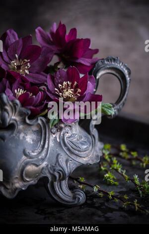 Doble púrpura Helleborus orientalis en una sembradora de peltre - flores oscuras