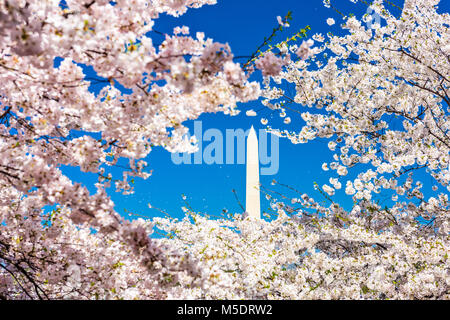 Washington, DC, Estados Unidos de América en la temporada de primavera.