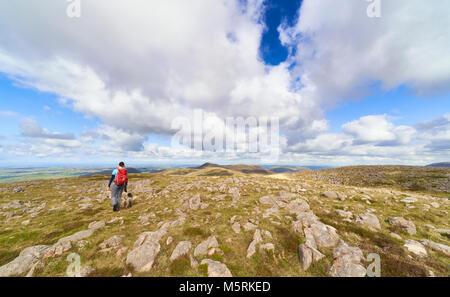 Una mujer caminante y su perro caminando por la cumbre de gran cargo hacia Loweswater cayó. El inglés Lake District, en el Reino Unido.