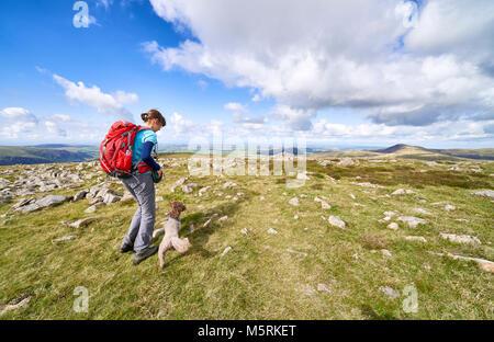 Un excursionista femenina dando a su perro un convite después de caminar fuera de la cumbre de gran sufragados, Loweswater cayó. El inglés Lake District, en el Reino Unido.
