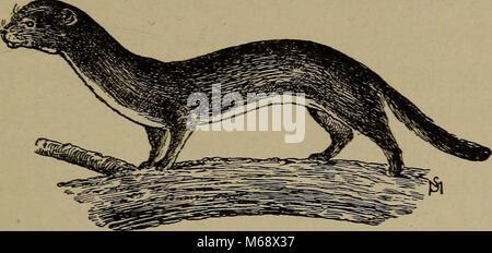 'La vida familiar en el campo y bosque; los animales, aves, ranas y salamandras' (1898)