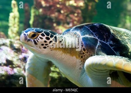 Cerca de tortugas marinas