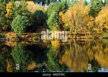 Feria de otoño en bosques de roble alrededor de piscinas con matices y tonalidades reflexionando sobre el agua de Foto de stock