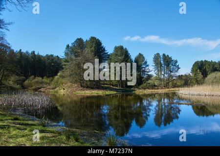 La vista desde uno de los muchos cueros en la Reserva Natural de Morton Lochs en Fife, cerca de Newport de Tay. Foto de stock