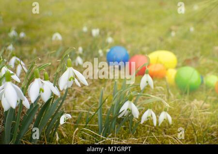Un grupo grande de campanilla de las nieves está parado sobre una pradera. En segundo plano se encuentran los huevos de pascua.